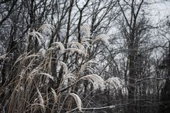 Closeup of long grass against the winter sky stock photo