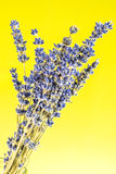 Closeup look of lavander on green background Stock Photos