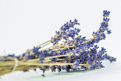 Closeup look of lavander Stock Photos