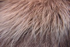 Closeup look of the red natural animal fur. With every single tiny hair visible royalty free stock images