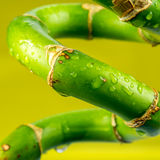Closeup look of twisted bamboo Stock Image