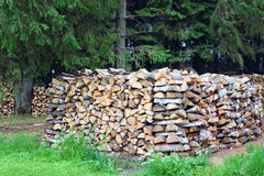 Closeup lot of folded birch wood under trees Stock Photo