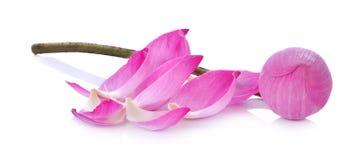 Closeup on lotus petal on white background Stock Photo