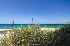 Closeup and low level shot, green grass over tropical sandy beach background at sunny day Stock Image