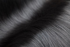 Closeup on luxurious glossy black hair Stock Image