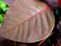 Closeup/Macro of Brown Color Leaf stock images