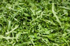Closeup macro fresh green selected leaves of arugula herb. Concept diet, vegetarian, natural, low-calorie meal. S royalty free stock image