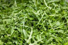 Closeup macro fresh green selected leaves of arugula herb. Concept diet, vegetarian, natural, low-calorie meal. S stock photography