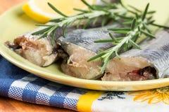 Closeup macro of fresh raw hake fish on the plate with rosemary.  Stock Image