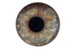 Closeup macro iris of female green eye isolated stock photography