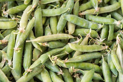 Closeup macro pile of fresh green peas ready for cleaning stock photo