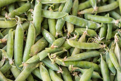 Closeup macro pile of fresh green peas ready for cleaning stock photos