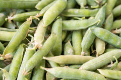 Closeup macro pile of fresh green peas ready for cleaning stock image