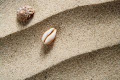 Closeup macro shell sea snail beach sand wavy Stock Image
