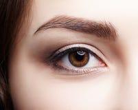 Closeup macro shot of  human brown female eye. Woman with natura. L nude face beauty makeup. Girl with perfect skin Stock Photos