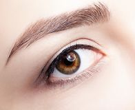Closeup macro shot of  human brown female eye. Woman with natura. L nude face beauty makeup. Girl with perfect skin Royalty Free Stock Photos