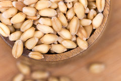 Closeup macro wheat grains background agriculture Stock Image