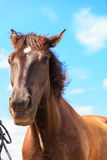 Closeup majestic graceful brown horse against sky Stock Photography
