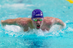 Closeup of male athlete swimming butterfly stroke in pool Royalty Free Stock Photos
