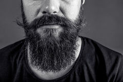 Closeup of a man beard and mustache over gray background Stock Photography