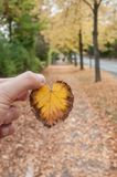 Man hand with little autumnal leaf between the finger Stock Photo