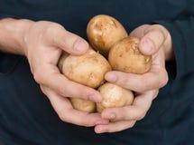 Closeup of man hands holding potatos. Closeup of man hands and fingers holding potatos Royalty Free Stock Image