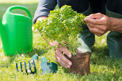 Closeup Of Man'Planting Plant Stock Photo