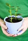 Closeup of mans hands holding potted plant Stock Image