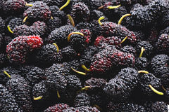 Closeup of many mulberry fruits Stock Photos