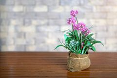 Closeup many pink flower in vase on wooden table and sunlight.  Stock Images