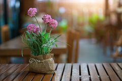 Closeup many pink flower in vase on wooden table and sunlight.  Stock Photography