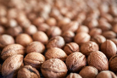 Closeup of many walnuts. With selective focus Stock Photography