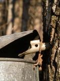 Maple sugar tap in tree Stock Photos