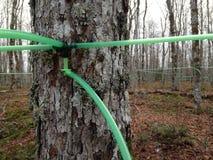 Maple Syrup Pipeline Nova Scotia royalty free stock photos