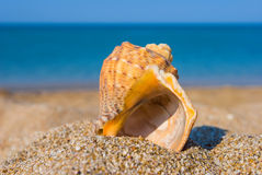 Closeup marine shell Stock Image