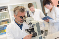 Closeup mature male scientist using microscope in laboratory Royalty Free Stock Photos