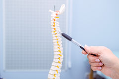 Closeup medical doctor woman pointing on Cervical spine model. Healthcare concept. Selective focus.  stock photography
