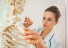 Closeup on medical doctor woman teaching anatomy. Using human skeleton model stock image