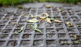 Closeup of the metal manhole cover with maple samaras on it royalty free stock photography