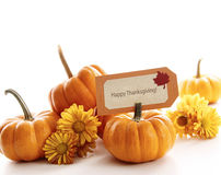 Closeup of mini pumpkins with place card Stock Images
