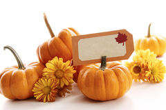 Closeup of mini pumpkins with place card stock photo