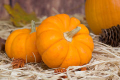 Closeup of Mini Pumpkins Royalty Free Stock Photo