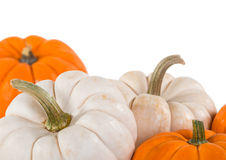 Closeup of mini pumpkins on white Royalty Free Stock Photography