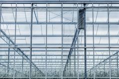 Greenhouse close up with young crop. Royalty Free Stock Images