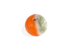 Closeup of a moldy orange on a white Royalty Free Stock Images
