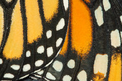 Closeup of Monarch wings. Closeup of Monarch butterfly wings royalty free stock image