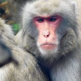 Closeup of a monkey's face. At the zoo Stock Photo