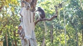 Closeup Monkeys Sit Play on Tree Trunk in Park stock footage