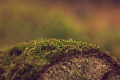 Moss on tree stock image