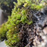 Green Moss closeup on tree stock images